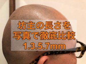 坊主の長さを写真で解説1,3,5,7㎜