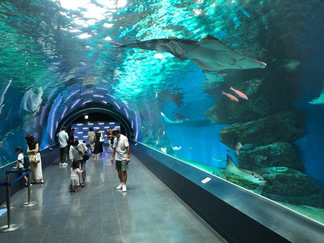 品川アクアパーク水族館ワンダーチューブ