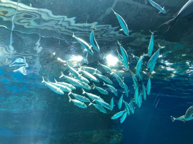 品川アクアパーク水族館