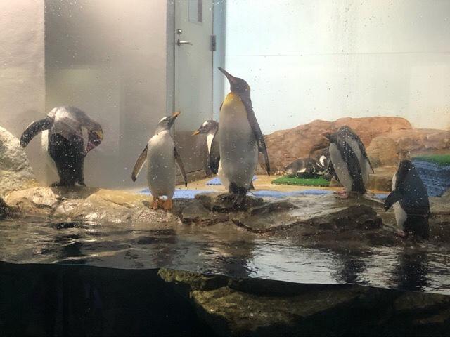 品川アクアパーク水族館ペンギン